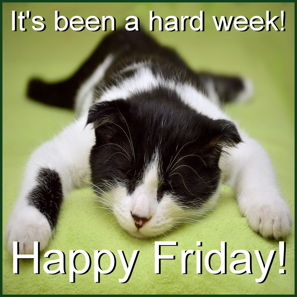 Image result for happy friday cat